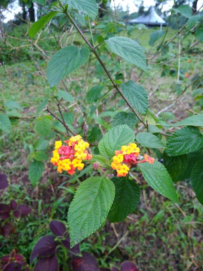 Les fleurs et le Gul soient 1 image stock