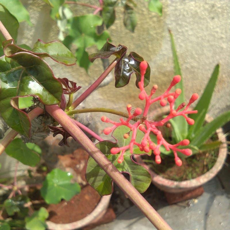 les fleurs, et les feuilles, usines, fleurs rouges, vert part image stock