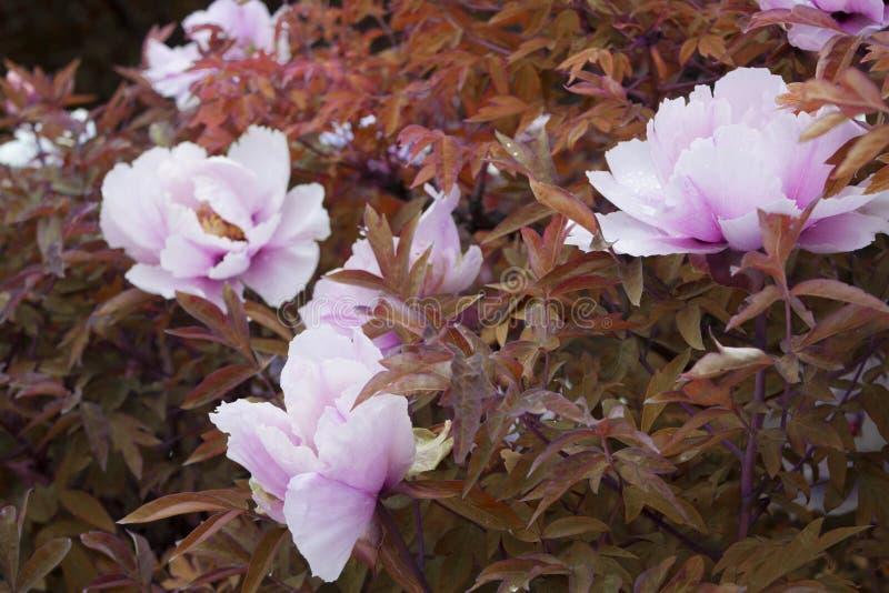 Les fleurs fleurissent en automne photo stock