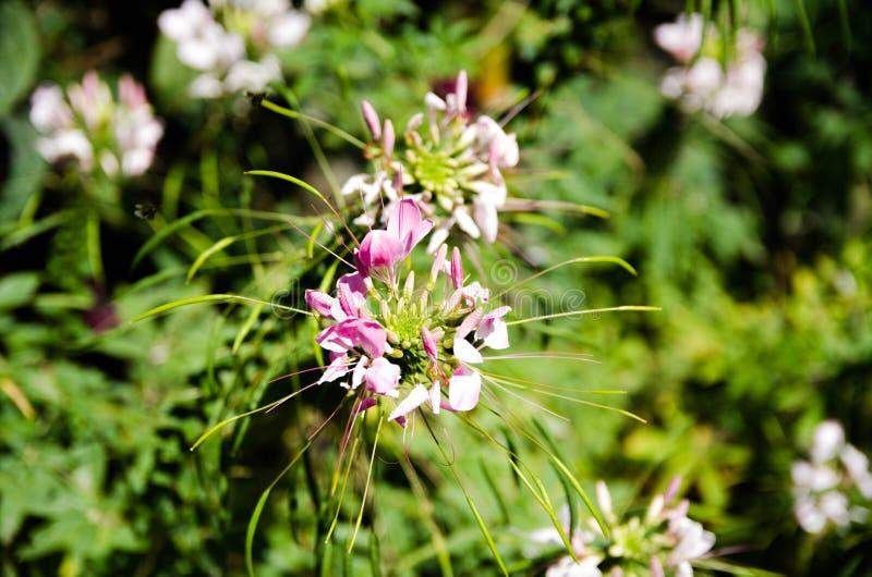 Les fleurs fleurissent votre coeur images libres de droits