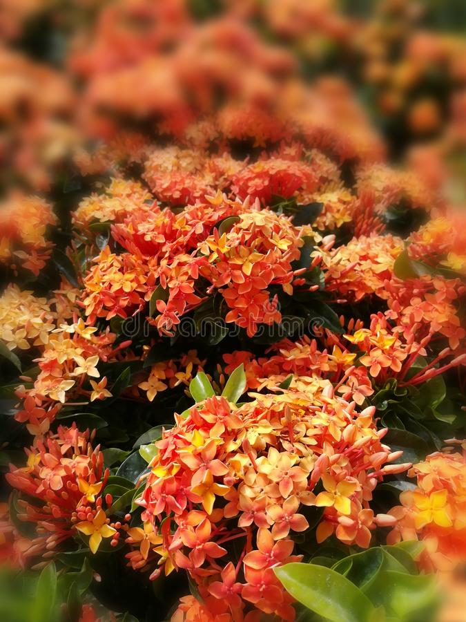 Les fleurs font du jardinage fond orange de voyage d'été les vacances où naturelles voyagent voyage photo stock