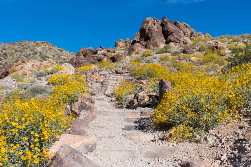 Les fleurs jaunes couvrent la terre le long de la traînée de saleté photo libre de droits