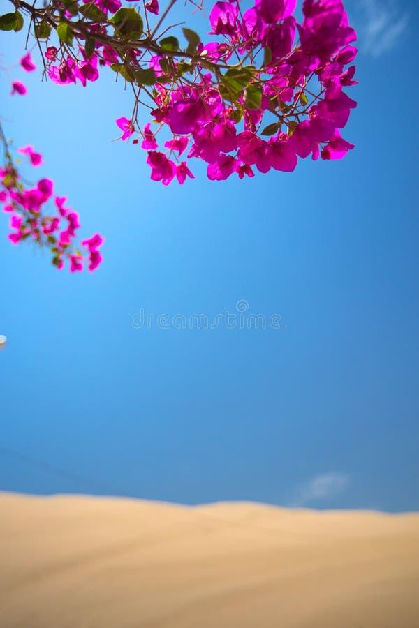 Les fleurs ont fleuri dans une oasis dans le désert photo stock
