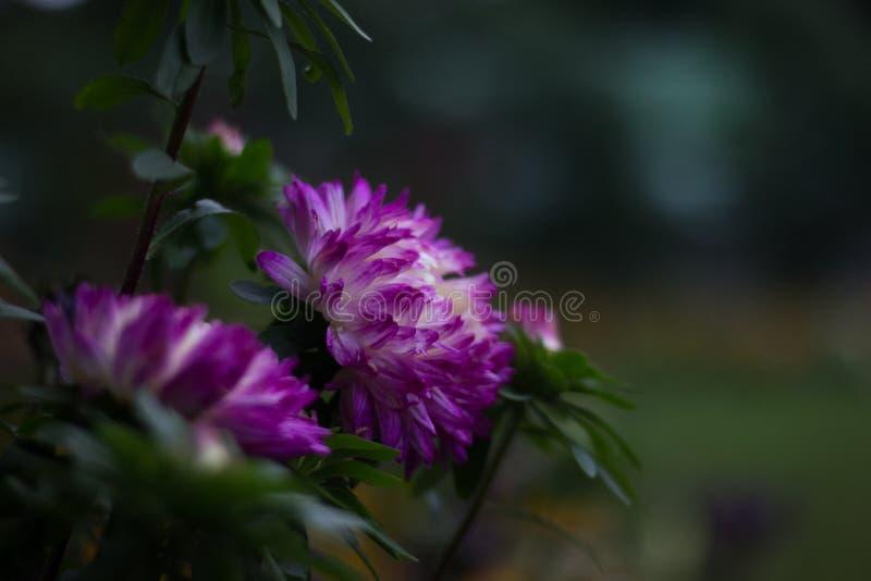 Les fleurs ont lieu comme notre vie Architecture en nature photos libres de droits