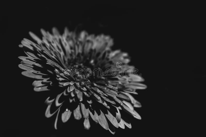 Les fleurs ont tiré dans un type d'beaux-arts dans un studio images stock
