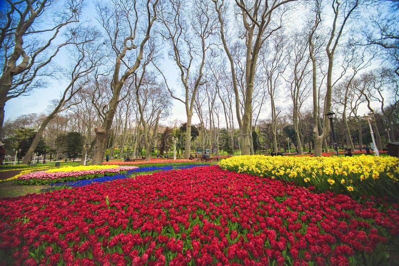 les fleurs pendant le festival annuel de tulipe d 39 avril istanbul dans gulhane se garent image. Black Bedroom Furniture Sets. Home Design Ideas