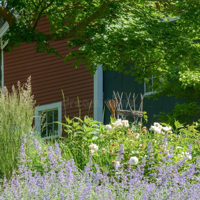 Les fleurs pourpres et blanches cachent une belle grange rouge dans le mA photographie stock