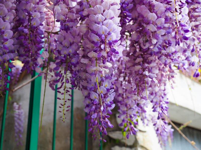 Les fleurs pourpres sont un beau groupe image stock