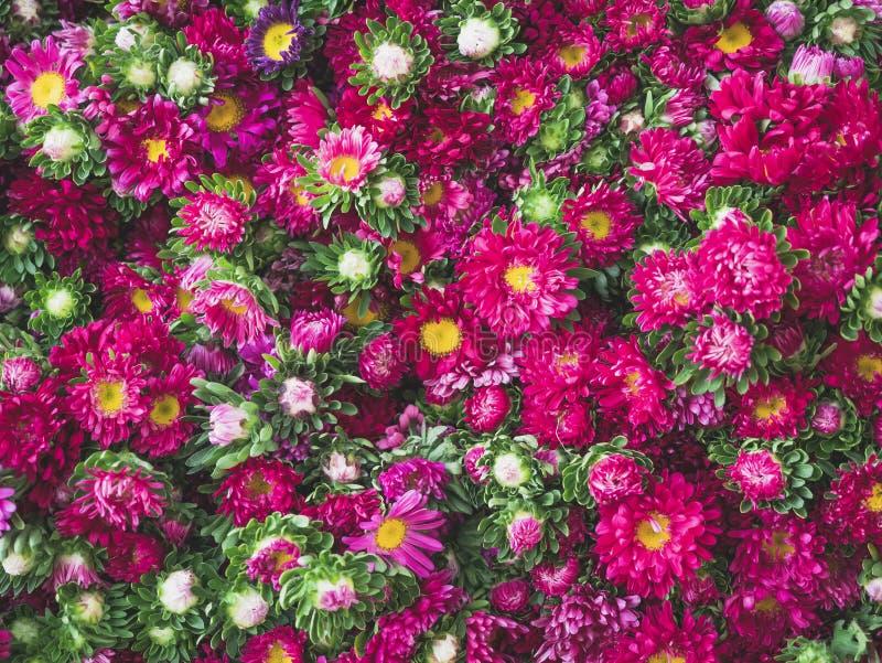 Les fleurs roses fleurissent fond floral de nature image libre de droits