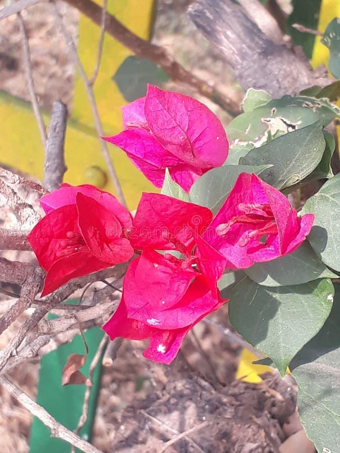 Les FLEURS roses sont vous réalisent l'environnement pour moi image stock