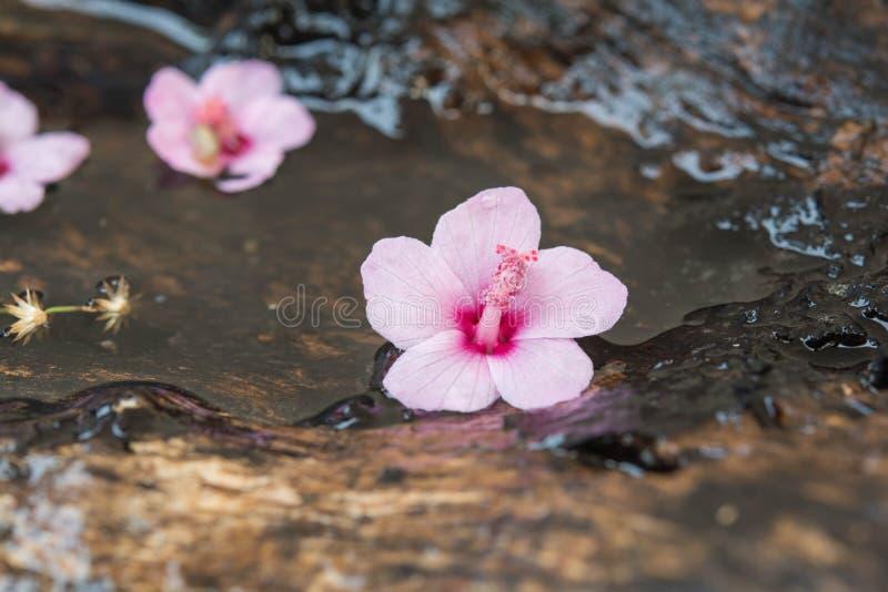 Les fleurs roses tombent sur le bois photo stock