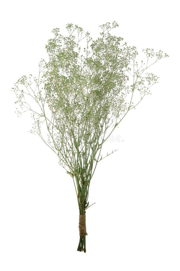 les fleurs sèches sèches par groupe de bouquet ont isolé le blanc photo stock