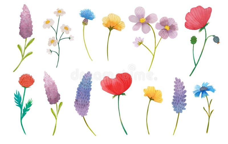 Les fleurs sauvages refoulent le fond d'illustration d'ensemble d'aquarelle illustration libre de droits