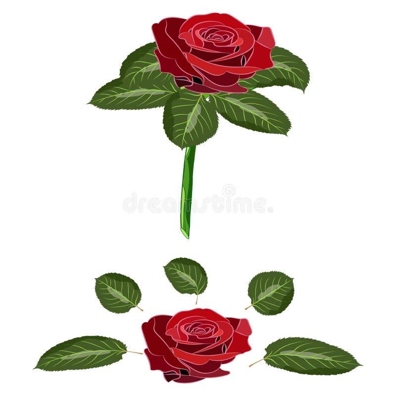 Les fleurs se sont levées, des bourgeons d'écarlate et des feuilles vertes de tige D'isolement sur le fond blanc Illustration de  illustration stock