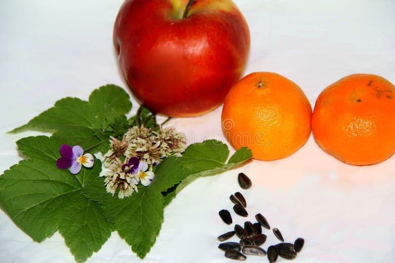 Les fleurs se trouvent sur les feuilles des groseilles à côté du fruit image stock