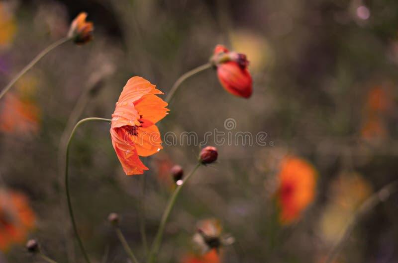 Les fleurs sont encore belles après la pluie image libre de droits