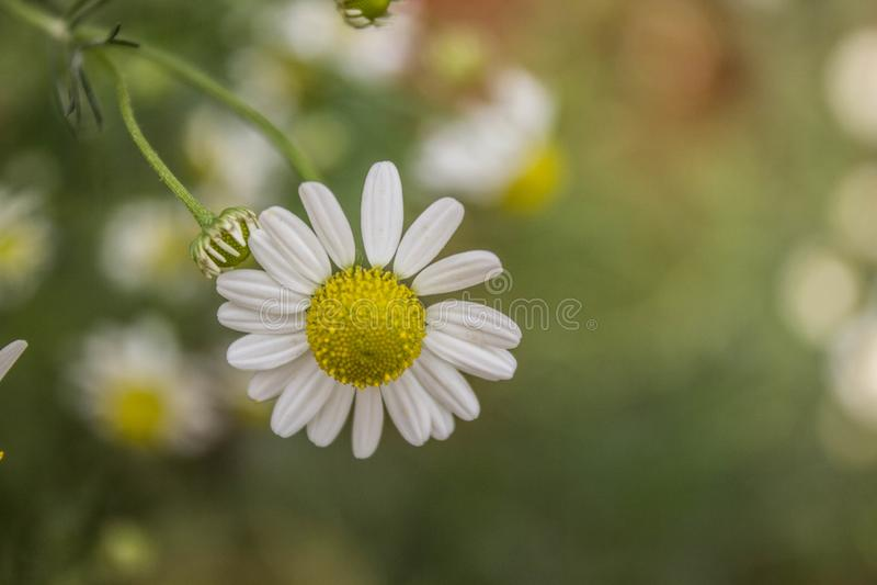 Les fleurs sont toujours belles, n'importe comment simples photo libre de droits