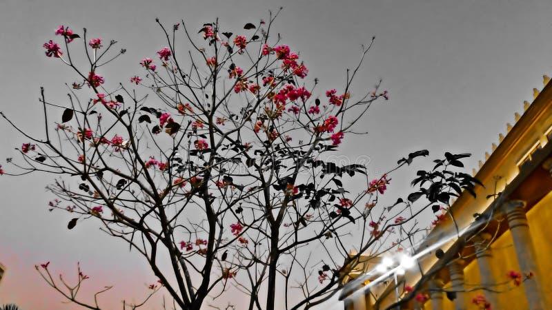 Les fleurs sur l'arbre avec le fond brouillé photo libre de droits