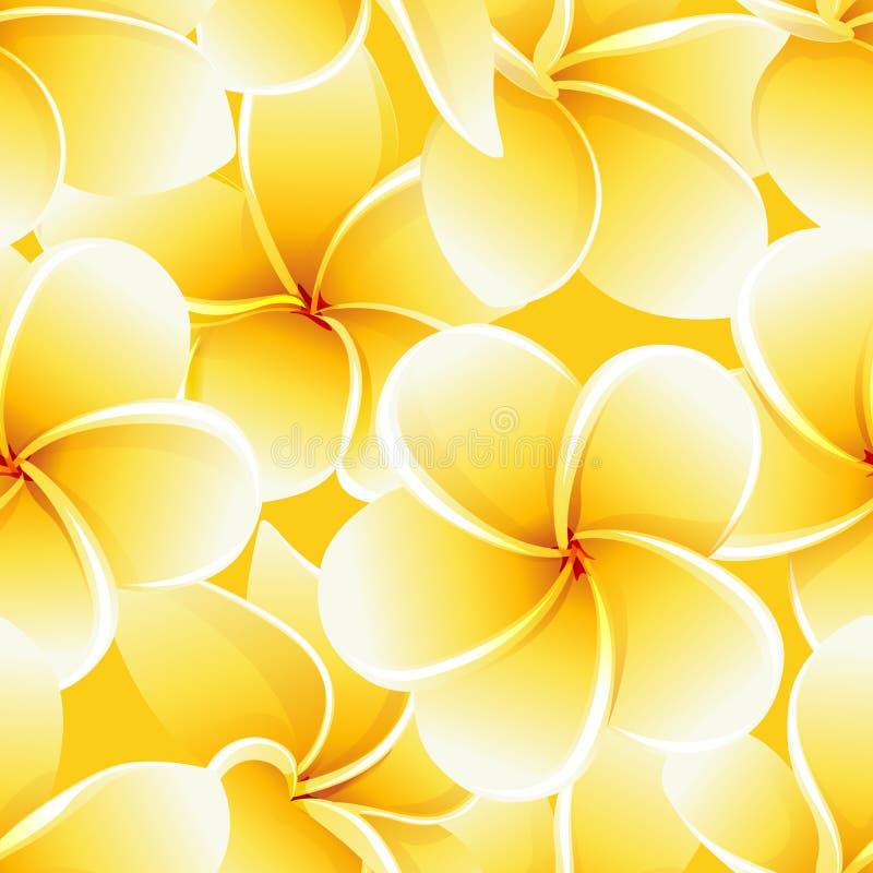 Les fleurs tropicales d'été de modèle de plumeria sans couture de frangipani dirigent le fond illustration de vecteur
