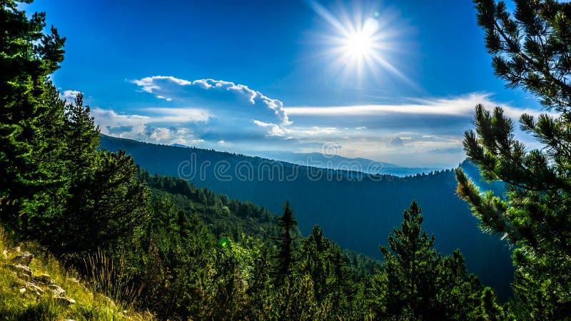Les forêts de montagne de Rila photo stock