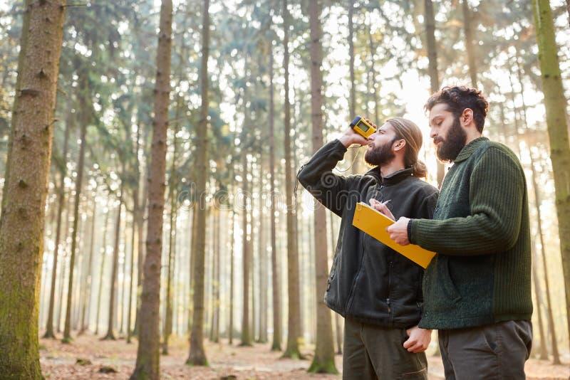 Les forestiers déterminent la taille d'arbre avec le télémètre images libres de droits
