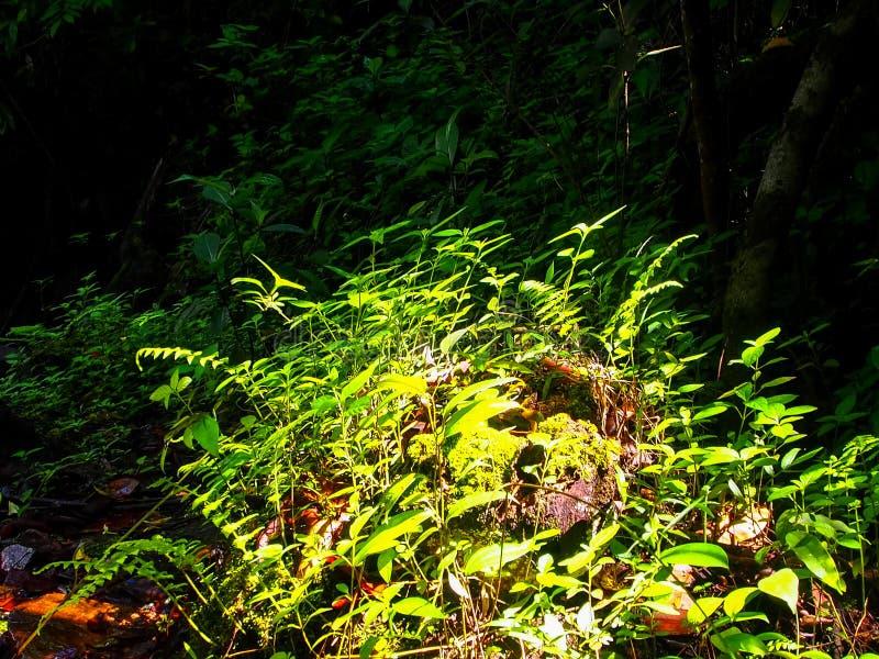 Les fougères vertes ont accentué par le soleil photos libres de droits