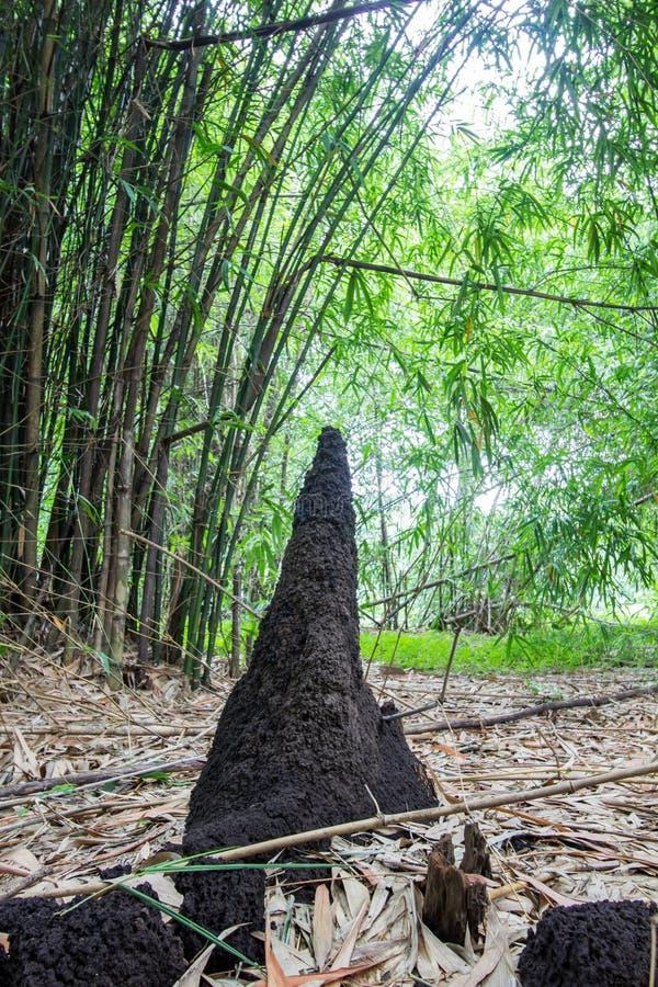 Les fourmilières et les bambous chez Waeruwan font du jardinage en parc de PhutthamonthonBuddhist dans le secteur de Phutthamonth photo stock