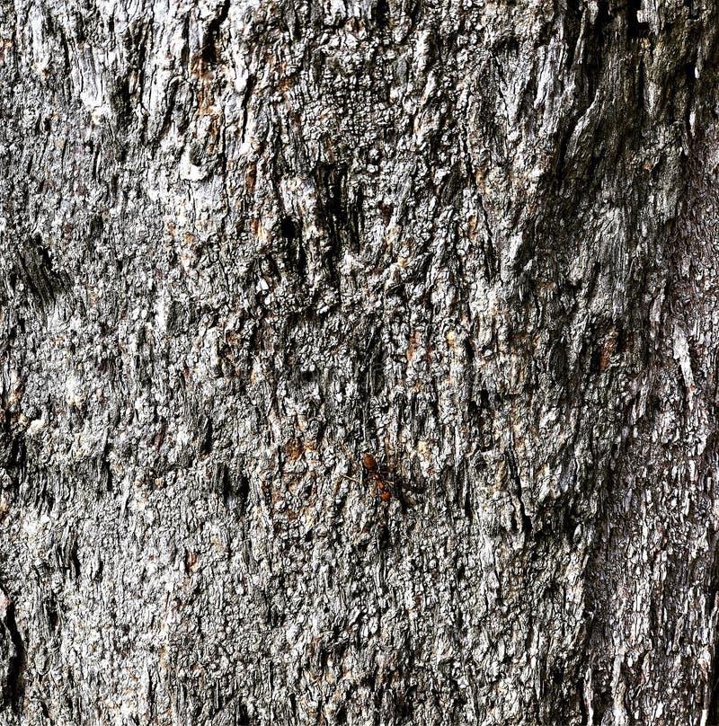 Les fourmis sur l'arbre images libres de droits