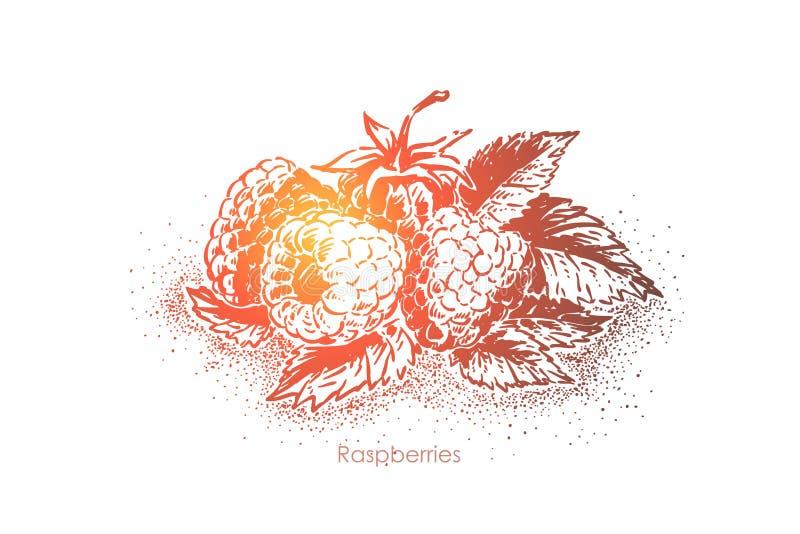 Les framboises mûres avec le feuillage, les baies délicieuses se ferment, ingrédient de jus, repas naturel, dessert de vegan illustration de vecteur