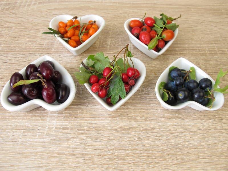 Les fruits sauvages avec des cerises de cornaline, argousier porte des fruits, des cynorrhodons, des fruits de prunelliers et des photographie stock libre de droits