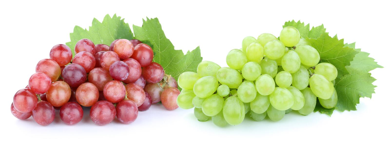Download Les Fruits Verts Rouges De Raisins Portent Des Fruits D'isolement Sur Le Blanc Photo stock - Image du raisin, frais: 76078506
