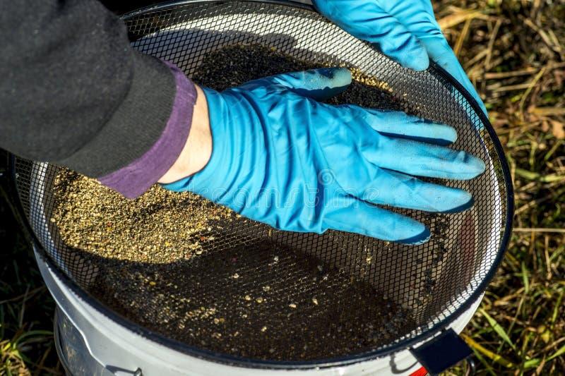 Les gants de pêcheur tamise l'amorce au travers du tamis dans le seau image stock