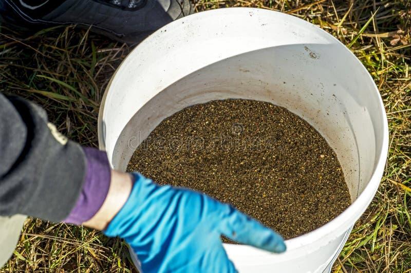 Les gants de pêcheur tamise l'amorce au travers du tamis dans le seau photographie stock