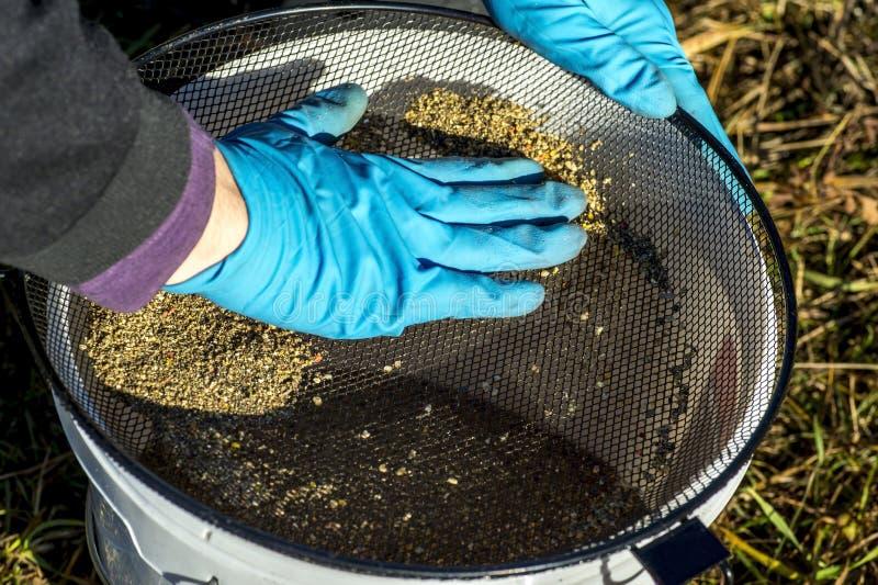 Les gants de pêcheur tamise l'amorce au travers du tamis dans le seau photo libre de droits