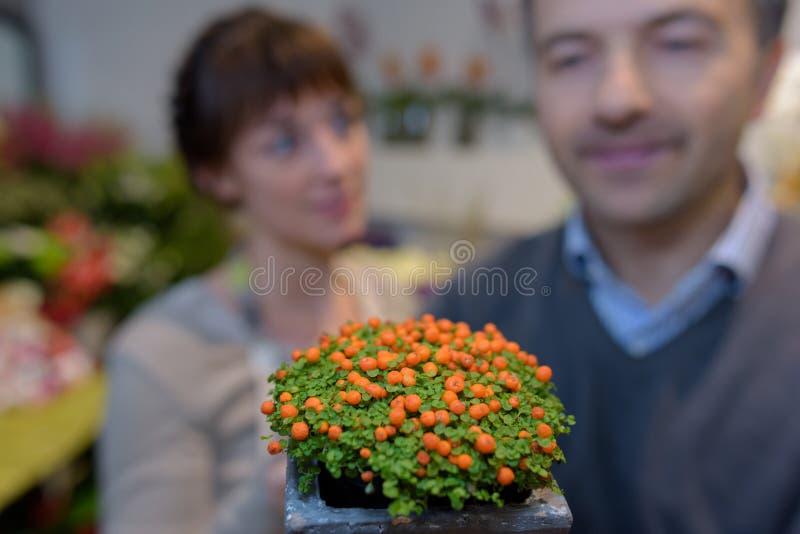 Les gens à l'arrière-plan derrière l'usine avec les bourgeons oranges images libres de droits