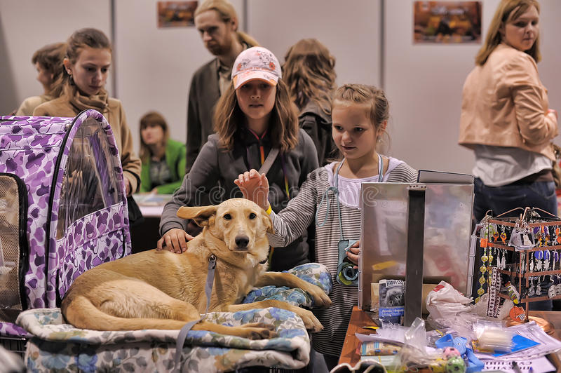 Les gens à la distribution d'exposition des animaux égarés images libres de droits