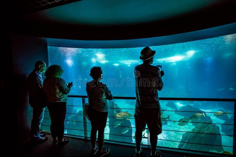 Les gens à Lisbonne Oceanarium photographie stock libre de droits