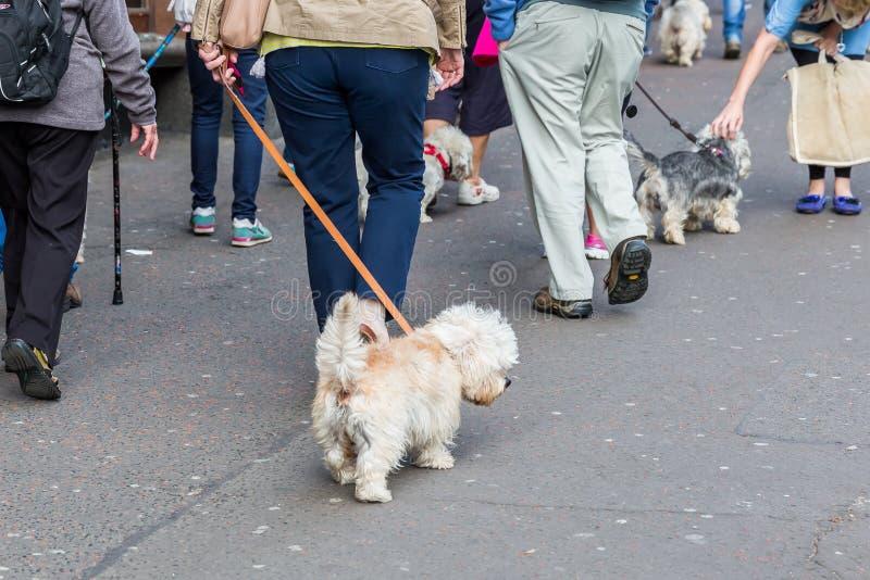 Les gens avec Dandie Dinmont Terrier dans la ville photo libre de droits