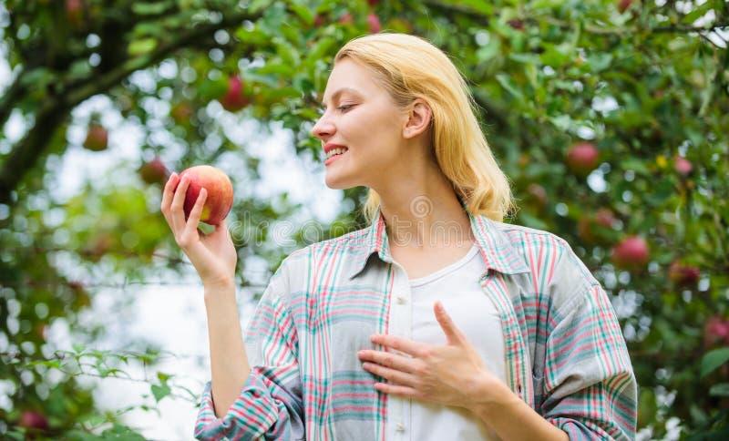 Les gens du pays cultivent le concept Fond de jardin de pomme de prise de femme Produit naturel organique de produits agricoles R image stock