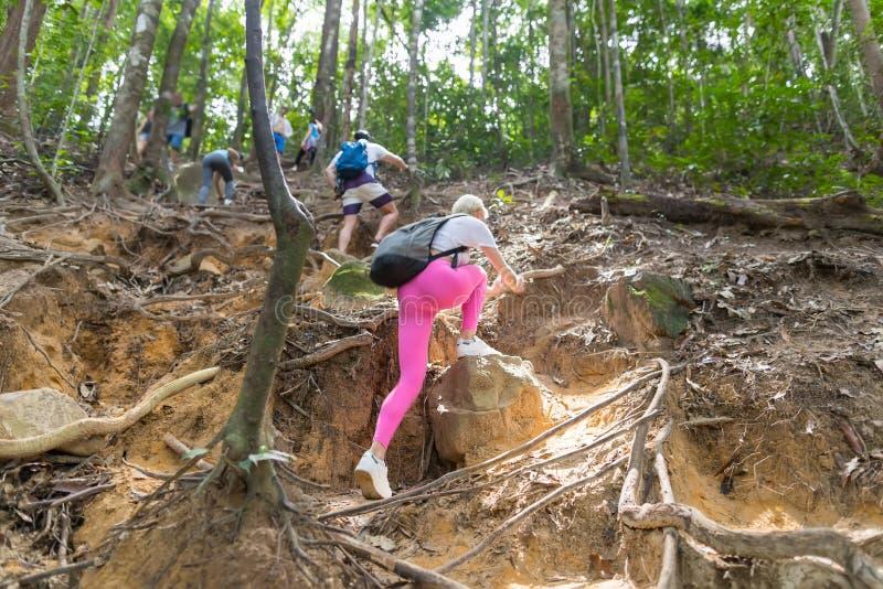 Les gens groupent avec le trekking de montagne de montée de sacs à dos sur Forest Path Back Rear View, les jeunes hommes et la fe images libres de droits