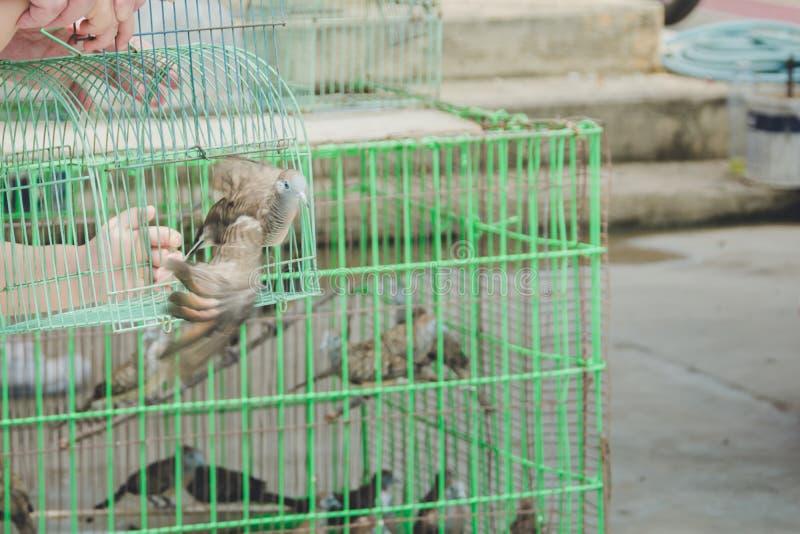 Les gens libérant des oiseaux, faisant de bonnes choses pour créer kar positif image libre de droits