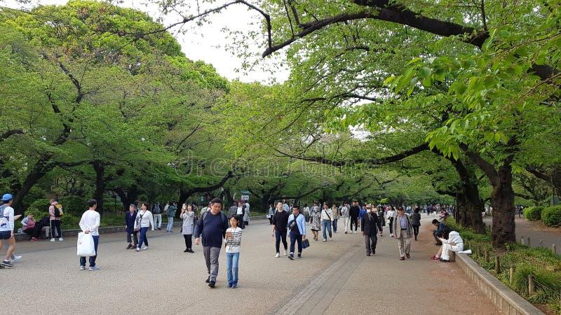 Les gens marchant en parc d'Ueno, Tokyo, Japon images libres de droits