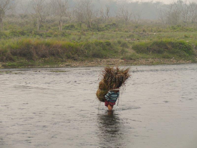 Les gens portent l'herbe après parc national Népal de Chitwan de saison d'herbe photographie stock libre de droits
