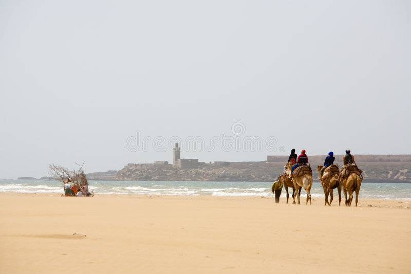 Les gens sur le chameau à la plage photos libres de droits