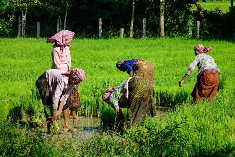 Les gens travaillant au gisement de riz au Vietnam photographie stock