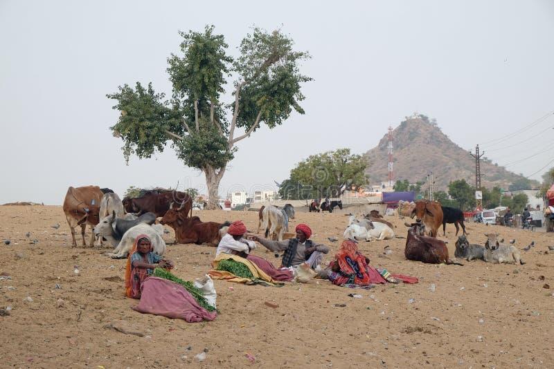 Les gens vendant l'herbe égrappent aux passants indous pour qu'ils alimentent aux vaches, Pushkar, Inde photo libre de droits