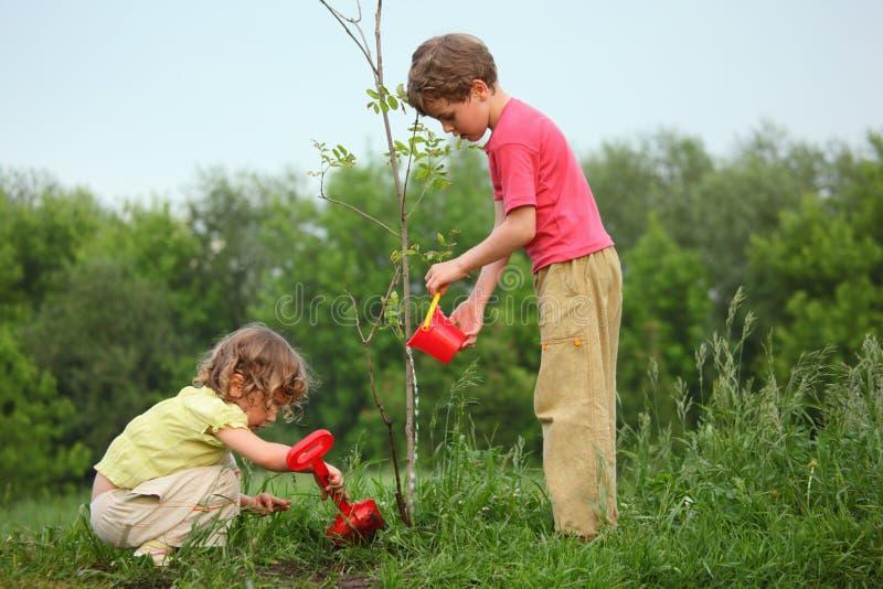 Les gosses plantent l'arbre photo stock