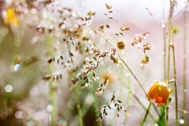 les gouttelettes proches de rosée engazonnent l'eau haute parfaite de matin de lame photos stock