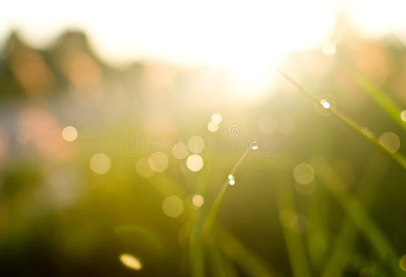 Les gouttes de l'eau à l'herbe inclinent le matin images libres de droits