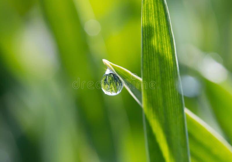 Les gouttes de rosée sur l'herbe verte au soleil image libre de droits